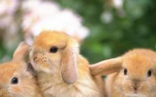 Как назвать кролика: имена и клички для девочек и мальчиков