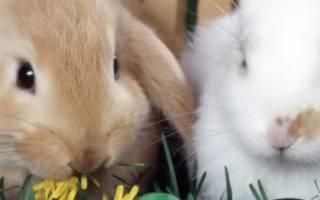 Какую траву можно давать декоративным кроликам?