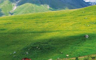 Карабахская порода лошадей: история, описание,использование