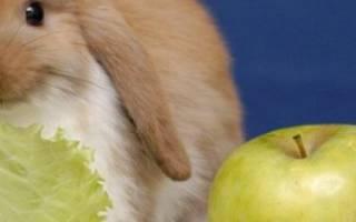 Можно ли кроликам давать яблоки?