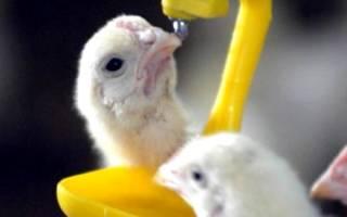 Чем пропоить цыплят для профилактики: обзор витаминов и антибиотиков