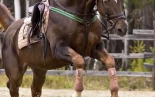 Зачем и как правильно бинтовать ноги лошади?