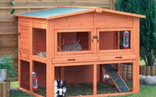Как ухаживать за кроликами дома и на ферме — основные принципы