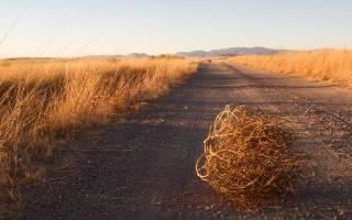 Жирнохвостые овцы: описание и характеристика