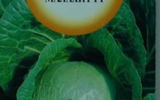 Капуста Малахит: описание сорта, характеристики и фото