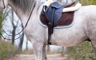 Домашняя лошадь: описание, особенности ухода, питание