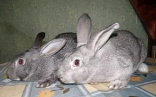 Болезни кроликов: симптомы, лечение и профилактика