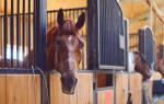 Конюшня для лошадей — проектирование, постройка своими руками