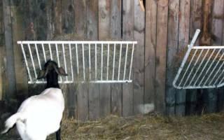 Чем кормить козу — основные правила и нормы питания коз