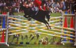 Конкурные породы лошадей: как выбрать лошадь для занятий конкуром?