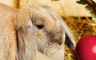 Можно ли кроликам свеклу или ее ботву?