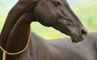 Самая красивая лошадь в мире: обзор пород и мастей