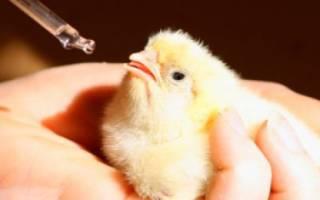 Чем пропоить цыплят в первые дни — виды препаратов, схемы и особенности пропойки