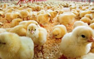 Конверсия корма в животноводстве: что это такое и как понизить