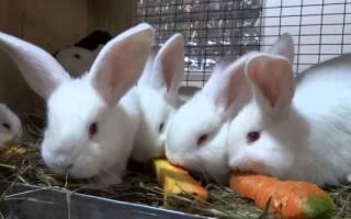 Какие овощи и фрукты можно давать кроликам?