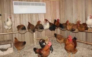 Выращивание кур: содержание, кормление, профилактика болезней