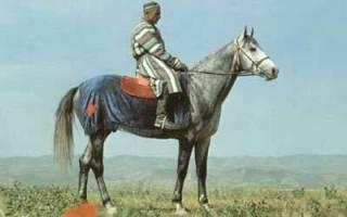 Карабаирская лошадь: история, описание породы, распространение