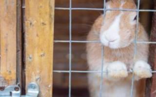 Клетки для откорма кроликов своими руками