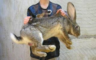 Выращивание кроликов: выбор породы, уход, особенности