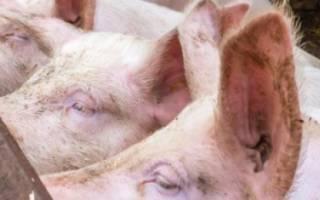 Как посторить хлев для свиней своими руками?