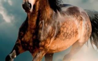 Самые лучшие лошади в мире: породы и их представители