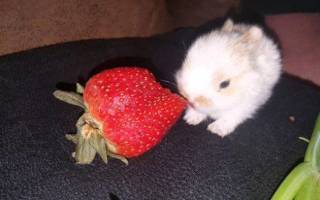 Можно ли кроликам клубнику или ее листья?