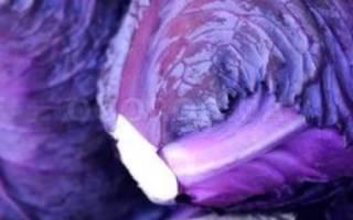 Краснокочанная капуста: выращивание и уход