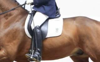 Ольденбургская лошадь: описание и характеристика породы, использование