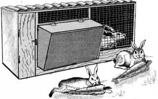 Крольчатник своими руками: варианты конструкций, список материалов, пошаговая инструкция