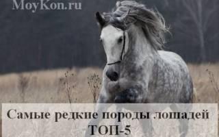 Самые редкие породы лошадей в мире