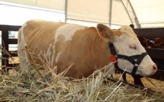 Жом свекловичный гранулированный — применение в рационе скота