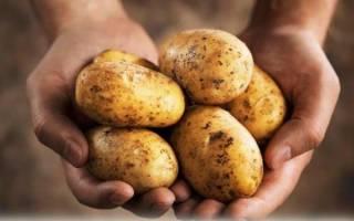 Можно ли кормить свиней сырой картошкой и как это делать правильно?