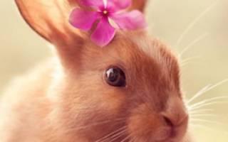 Какие звуки издают кролики?