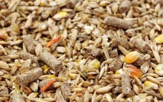 Корм для домашних птиц: чем кормить кур, уток, гусей, перепелов