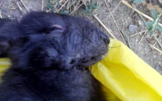 Пастереллез у кроликов: симптомы и лечение