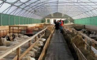 Стойловое содержание овец без выпаса
