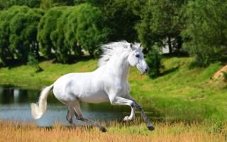 Андалузская лошадь — происхождение, особенности, покупка, разведение, уход и содержание