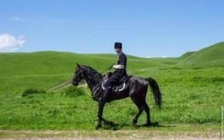 Кабардинская (черкесская) порода лошадей: описание, особенности ухода и разведения