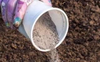 Чем подкормить капусту в открытом грунте в июле: народные средства