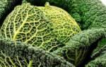 Как хранить савойскую капусту на зиму?
