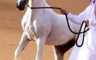 Популярные породы лошадей в России, Европе и мире