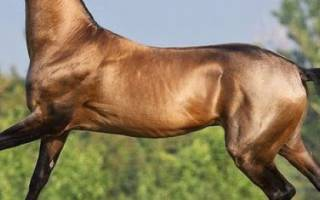 Породы и виды лошадей: классификация, описание