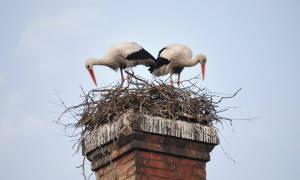 Как сделать гнездо: описание действий по созданию гнёзд для птиц