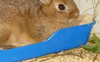 Как приучить кролика к лотку — обзор проверенных методов