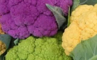 Почему цветная капуста называется цветной?