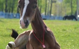 Разведение лошадей как бизнес: как составить бизнес-план