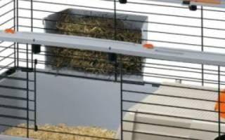 Содержание кроликов в клетках для начинающих