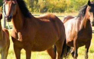 Продолжительность жизни диких и домашних лошадей