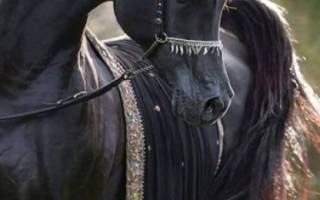 Чистокровные породы лошадей: особенности, характеристики