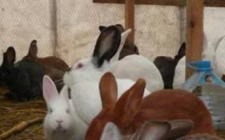 Вольерное содержание кроликов: преимущества и недостатки